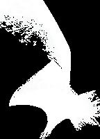Catherine McCrum logo